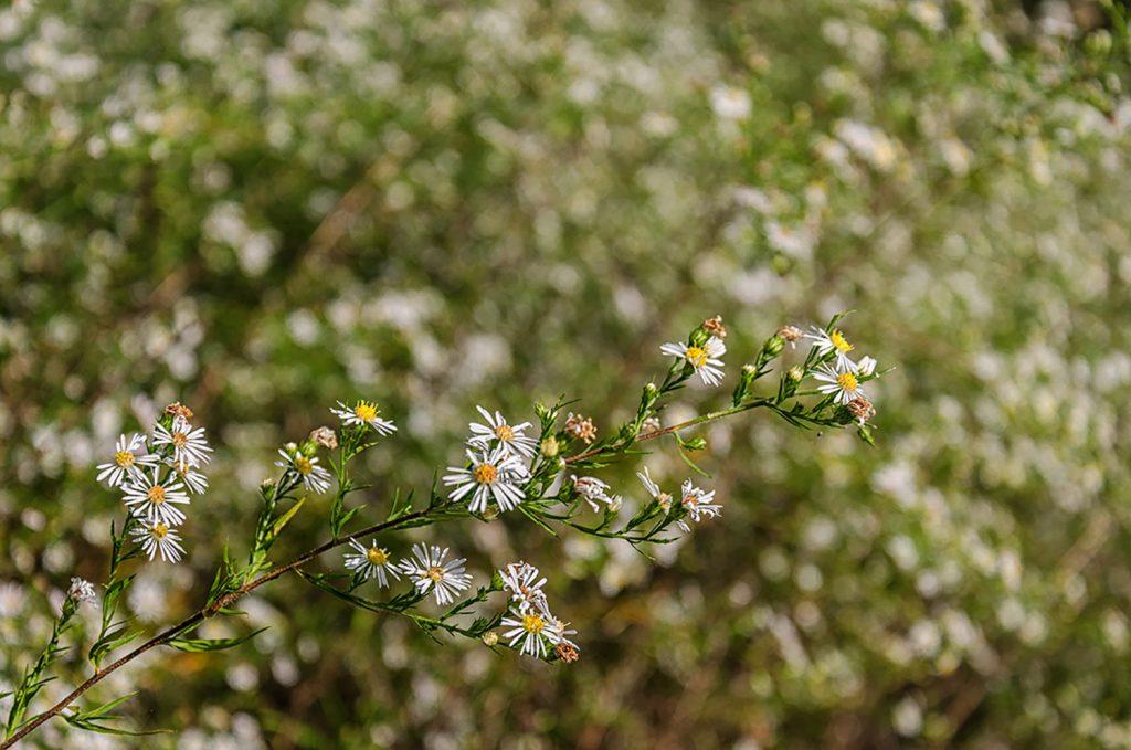 Flowers in Zoar